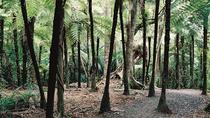 Auckland Shore Excursion: Small-Group Coast and Rainforest Tour, Auckland, Ports of Call Tours