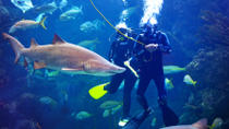 Dive with the Sharks at The Florida Aquarium in Tampa Bay, Tampa, Attraction Tickets