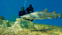Tampa Shore Excursion: Dive with the Sharks at the Florida Aquarium, Tampa, Ports of Call Tours