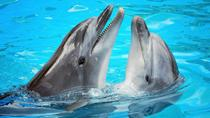 Ocho Rios Dolphin Encounter Program, Ocho Rios, Attraction Tickets