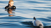 Akaroa Shore Excursion: Swim with Dolphins in Akaroa Harbour, Christchurch, Ports of Call Tours