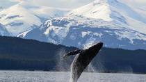 Juneau Whale-Watching Cruise and Brewery Tour, Juneau