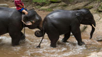 Chiang Mai Elephants at Work Tour, Chiang Mai, Half-day Tours