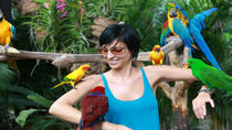 Private Tour: Singapore's Jurong Bird Park Tour, Singapore, Sightseeing & City Passes