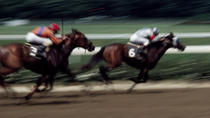 Singapore Turf Club: Horse Racing with VIP Lounge Access, Singapore, Sporting Events & Packages
