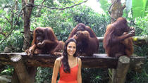 Singapore Zoo Breakfast with Orangutans, Singapore, Nature & Wildlife
