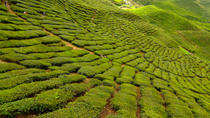 2-Day Cameron Highlands Adventure from Kuala Lumpur, Kuala Lumpur, Thermal Spas & Hot Springs