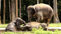 Private Tour: Elephant Orphanage Sanctuary Day Tour from Kuala Lumpur, Kuala Lumpur, Half-day Tours