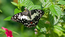 Private Tour: Kuala Lumpur Nature In The City Tour including Butterfly Park, Kuala Lumpur
