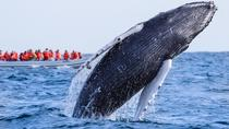 Whale Watching Photo Safari Tour in Los Cabos, Los Cabos, Dolphin & Whale Watching