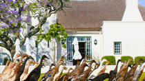 Half-Day Winelands Tour Stellenbosch from Cape Town, Cape Town, Wine Tasting & Winery Tours