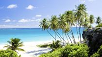 Beautiful Barbados Coastal Sightseeing Tour, Barbados, Nature & Wildlife
