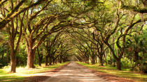 New Orleans Super Saver: Swamp and Bayou Sightseeing plus Oak Alley Plantation Tour, New Orleans,...