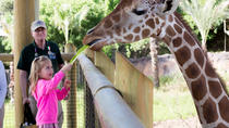 San Antonio Zoo General Admission, San Antonio, Zoo Tickets & Passes
