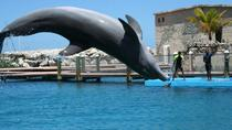 Dolphin and Shark Encounter Combo in Puerto Plata, Puerto Plata, Day Trips