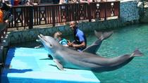 Forfait d'une journée Ocean World Puerto Plata Pass , Puerto Plata, Attraction Tickets