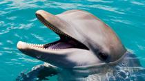 Ocean World Dolphin Swim, Puerto Plata, Swim with Dolphins