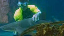 Shark and Stingray Encounter at Ocean World, Puerto Plata, Nature & Wildlife