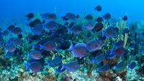 Grand Cayman Shore Excursion: Semi-Submarine and Fish Feeding Show, Cayman Islands, Half-day Tours
