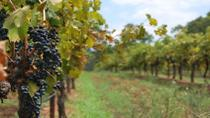 Private Tour: Hunter Valley Region and Boutique Wineries Day Trip from Sydney, Sydney, Overnight ...