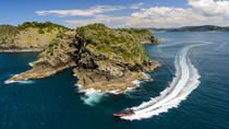 Island Cliffs and Caves Adventure Tour, Bay of Islands, Dolphin & Whale Watching
