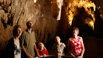 Waitomo Glowworm Caves Discovery ab Auckland, Auckland, Day Trips