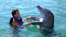 Puerto Aventuras Dolphin Encounter, Playa del Carmen, Swim with Dolphins