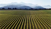 Full-Day Marlborough Wine Tour from Picton or Blenheim, Picton, Wine Tasting & Winery Tours