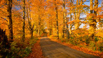 Fall Foliage Sightseeing Tour from Boston, Boston, null
