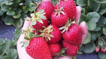 Mornington Peninsula including Strawberry Farm Day Tour from Melbourne, Melbourne, Day Trips