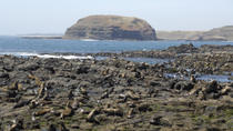 Phillip Island Nature Park and Wildlife Seals Cruise, Melbourne