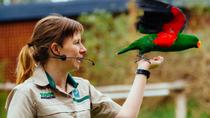 Puffing Billy Train Day Trip with Healesville Sanctuary Meet and Greet from Melbourne, Melbourne,...