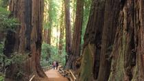 Private Tour to Muir Woods and Sausalito, San Francisco