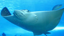 Belize Hol Chan Marine Reserve and Shark Ray Alley Snorkel Tour from Ambergris Caye , Ambergris ...