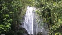El Yunque Rainforest Half-Day Trip from San Juan, San Juan, Half-day Tours