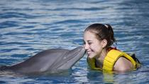 Cozumel Dolphin Trainer for a Day Program, Cozumel, Swim with Dolphins