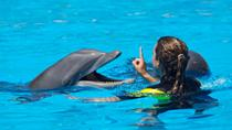 Dolphin Trainer for a Day in Cancun, Cancun, Swim with Dolphins