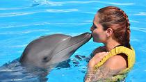 Riviera Maya Dolphin Trainer for a Day Program, Playa del Carmen, Swim with Dolphins