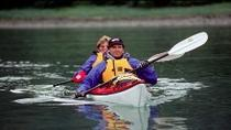 Tongass Wildlife Kayaking Adventure, Juneau, Ports of Call Tours