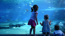 Billets coupe-file : aquarium Sea Life de Londres, London, Attraction Tickets