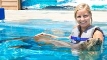 Sea Life Park Hawaii Admission Including Swim with Sea Lions or Sharks , Oahu, Theme Park Tickets & ...