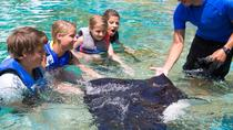 Sea Life Park Hawaii Admission with Optional Hawaiian Ray Encounter, Oahu, Theme Park Tickets & ...