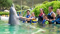 Swim with the Dolphins at Sea Life Park in Oahu, Oahu