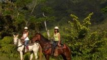 Kauai Horseback-Riding Adventure for Beginners, Kauai, Nature & Wildlife