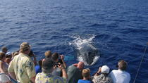 Mid-Morning Whale Watch from Kawaihae Harbor, Big Island of Hawaii, Dolphin & Whale Watching