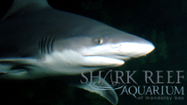 Shark Reef im Mandalay Bay Hotel und Casino, Las Vegas, Attraction Tickets