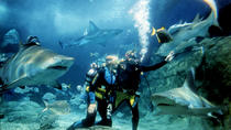 Shark Dive Experience at SEA LIFE Melbourne Aquarium, Melbourne, Attraction Tickets
