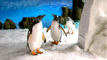 Skip the Line: Melbourne Aquarium Tickets, Melbourne