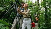 Bird-Watching Tour from Jaco, Jaco, Nature & Wildlife