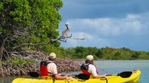 St Thomas Kayak Tour: Sunset Birding at Mangrove Lagoon, St Thomas, Day Cruises